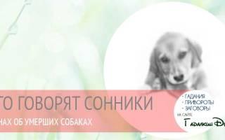 К чему снится мертвая собака сонник