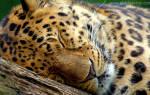 Видят ли животные сны сонник