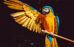 К чему снится птица залетевшая в дом сонник