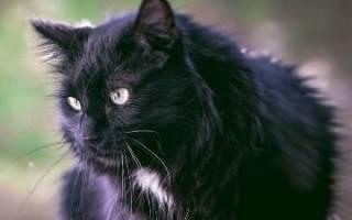 К чему снится черная кошка сонник