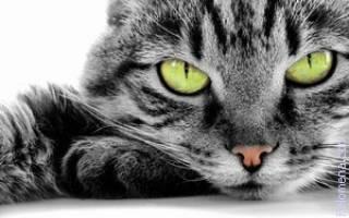Сонник кот на руках
