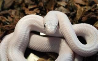 К чему снится белая змея которая кусает сонник