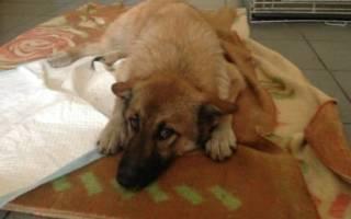 Видеть во сне раненую собаку сонник