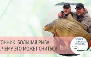 К чему снится большая рыба женщине сонник