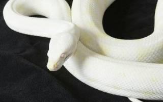 Сонник белая змея во сне