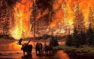 К чему снится пожар чужого дома тушить сонник