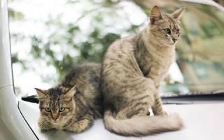 Видеть во сне кошек что означает сонник