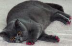 К чему снится большой кот сонник