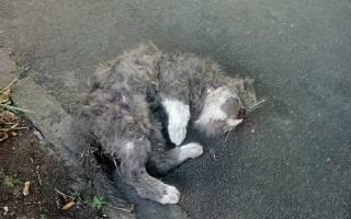 К чему снится раненая кошка сонник