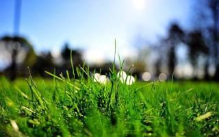 Зеленая трава во сне что означает сонник