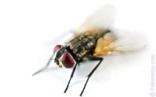 К чему снится бить мух во сне сонник