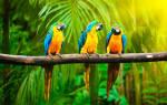 К чему снится попугай в клетке женщине сонник
