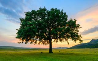 Дерево во сне что значит сонник