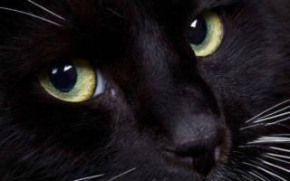 К чему снится черная кошка на руках сонник