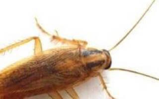 Сонник к чему снятся тараканы в квартире