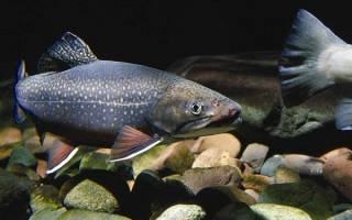 Видеть во сне рыбу живую для женщины сонник