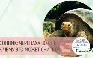 К чему снится черепаха сонник