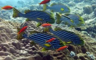 К чему снится огромная рыба женщине сонник