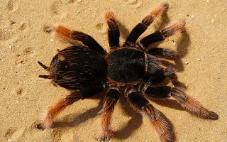 Большой паук во сне к чему снится сонник