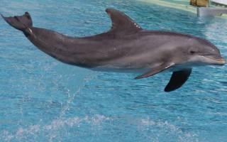 Дельфины во сне к чему снится сонник
