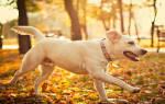 К чему снится большая белая собака женщине сонник
