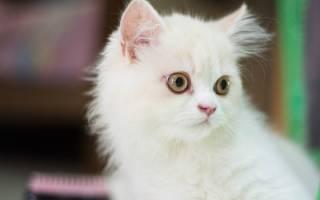 К чему снится белый котенок сонник