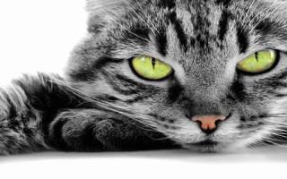 К чему снится красивая кошка сонник
