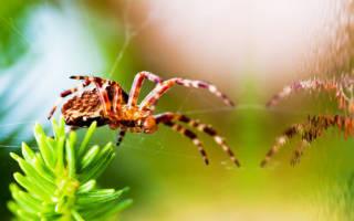 К чему снится паук большой коричневый мохнатый сонник