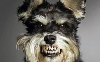 Сонник большая злая собака