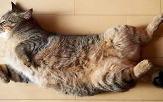 Сон умер кот сонник