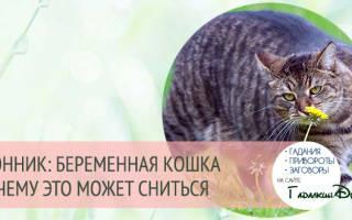 К чему снится беременная черная кошка сонник
