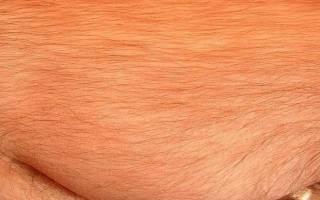 К чему снятся волосы на теле женщины сонник