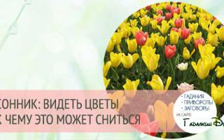 Сонник миллера цветы