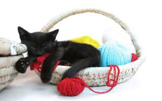 К чему снится котенок который нагадил сонник