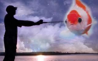 Сон рыба живая в воде сонник