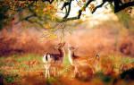 Видеть во сне оленя сонник