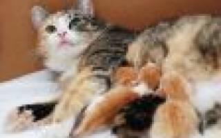 К чему снится черная кошка с котятами сонник
