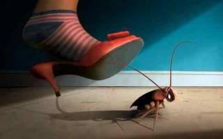 Сонник к чему снятся тараканы много