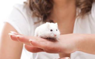 Мыши сонник толкование