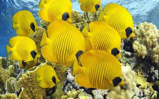 К чему снится рыба девушке сонник