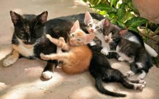Видеть во сне кошку с котятами сонник
