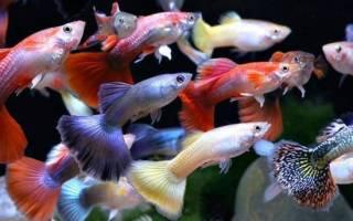 К чему снится много маленьких рыбок сонник