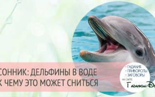 Толкование сна дельфины сонник