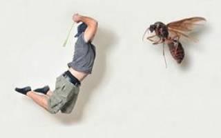 К чему снится убивать мух во сне сонник