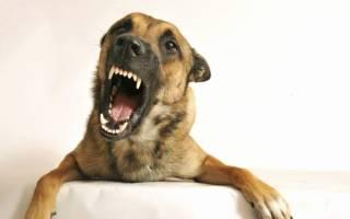 Во сне укусила собака сонник