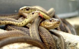 Сонник толкование снов к чему снится змея