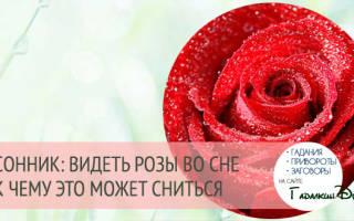 К чему снится много роз сонник