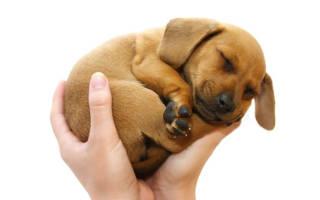 Брал на руки собаку сонник