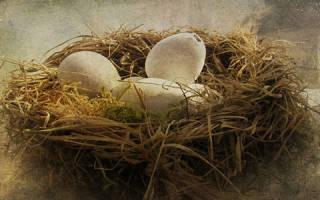 Видеть во сне гнездо сонник