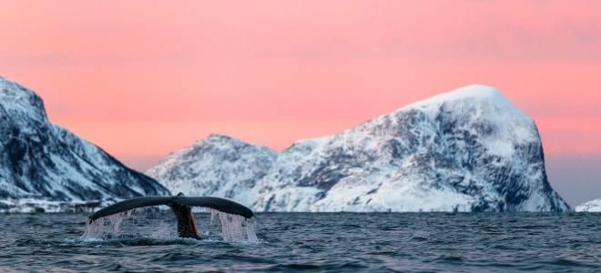 К чему снится кит в море женщине сонник